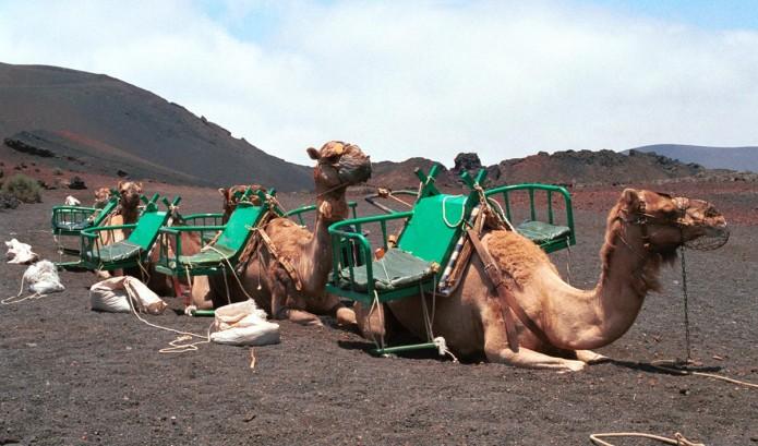 Vijf vervoersmiddelen om Lanzarote te verkennen