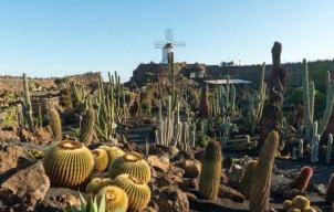 Een bezoek brengen aan Jardín de Cactus